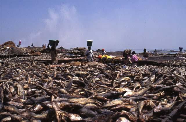 Nigerian fish market sun-dried fish