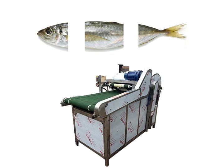 Commercial fish head tail cutting machine | cutter machine
