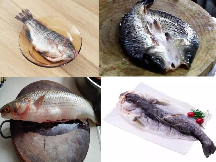 Application of fish killing machine