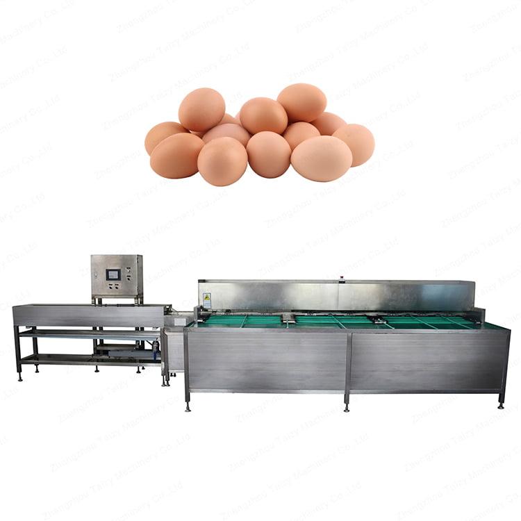 egg sorting machine